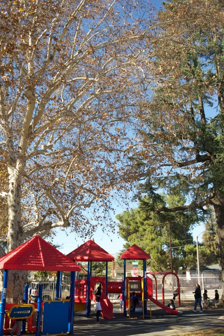 Garfield playground and trees