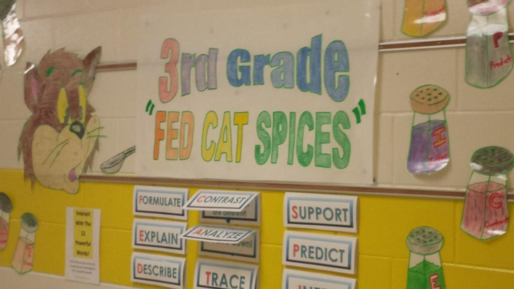 fed cat spices