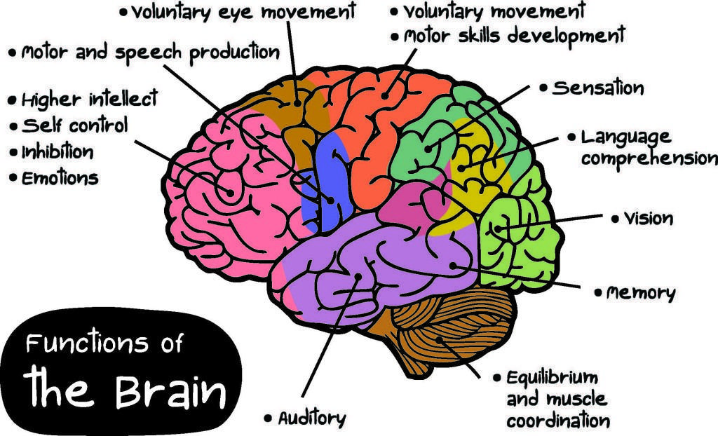 Brain health image explaining sections of the brain processes.