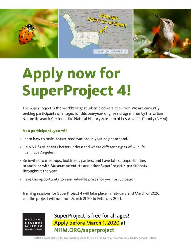 Super Project 4 Flyer