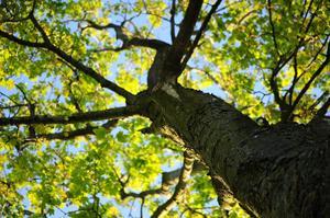 wood-nature-leaves-tree.jpg