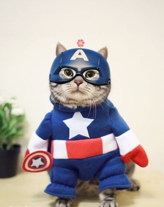 Captain America Cat.png