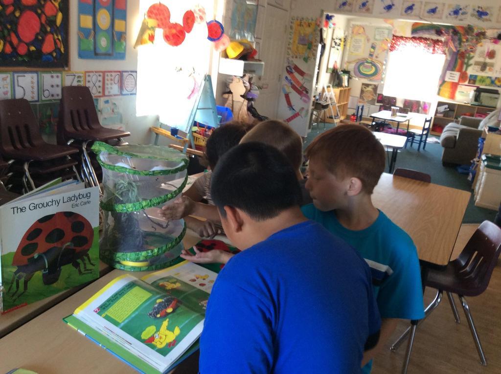 children and a bug farm