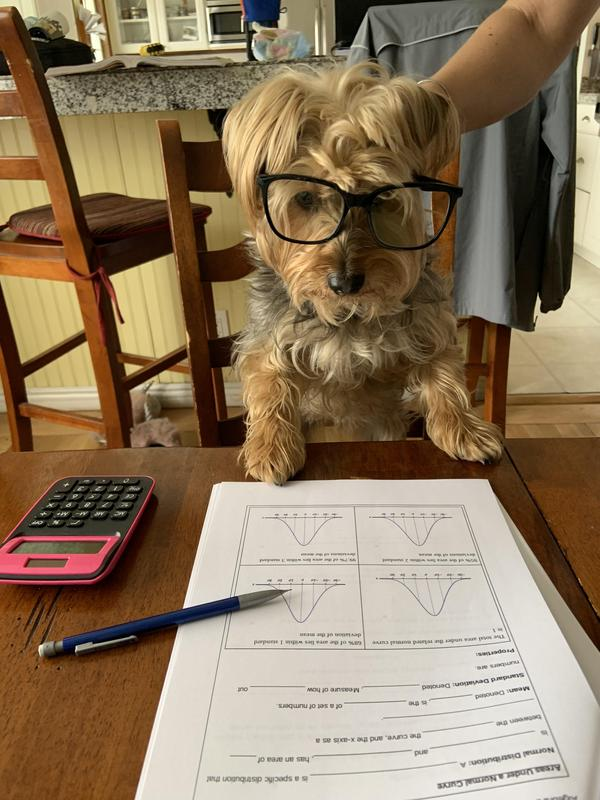 Pictures of pets doing homework