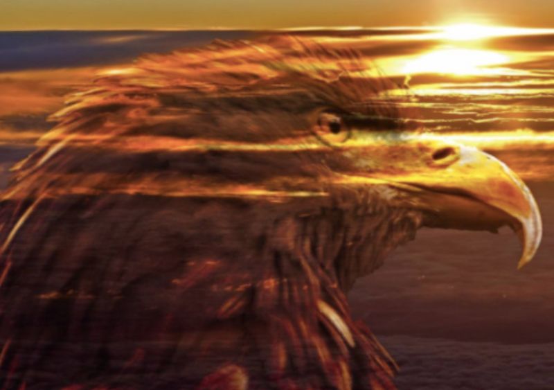 Sunset behind translucent eagle