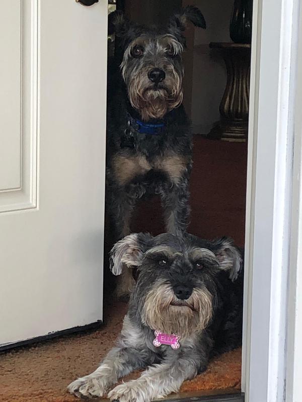 Bones and Elly looking out her door.jpeg