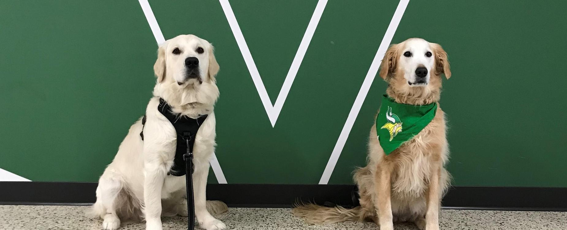 Thor and June, VHS therapy dogs, sitting in front of a Valpo Viking sign.