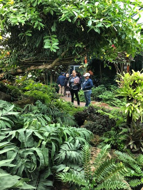 Parents standing near tropical folliage at the LA Arboretum