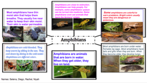 Amphibians animal group facts