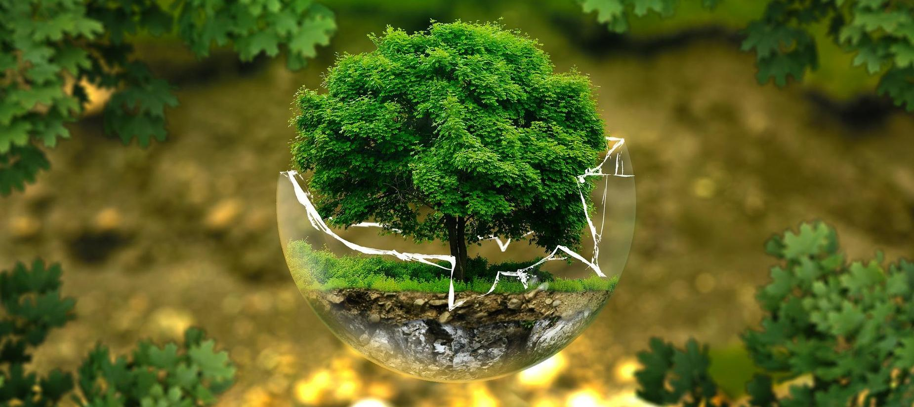 tree in a broken glass globe