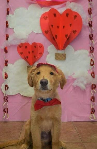 Rookie on V-Day!
