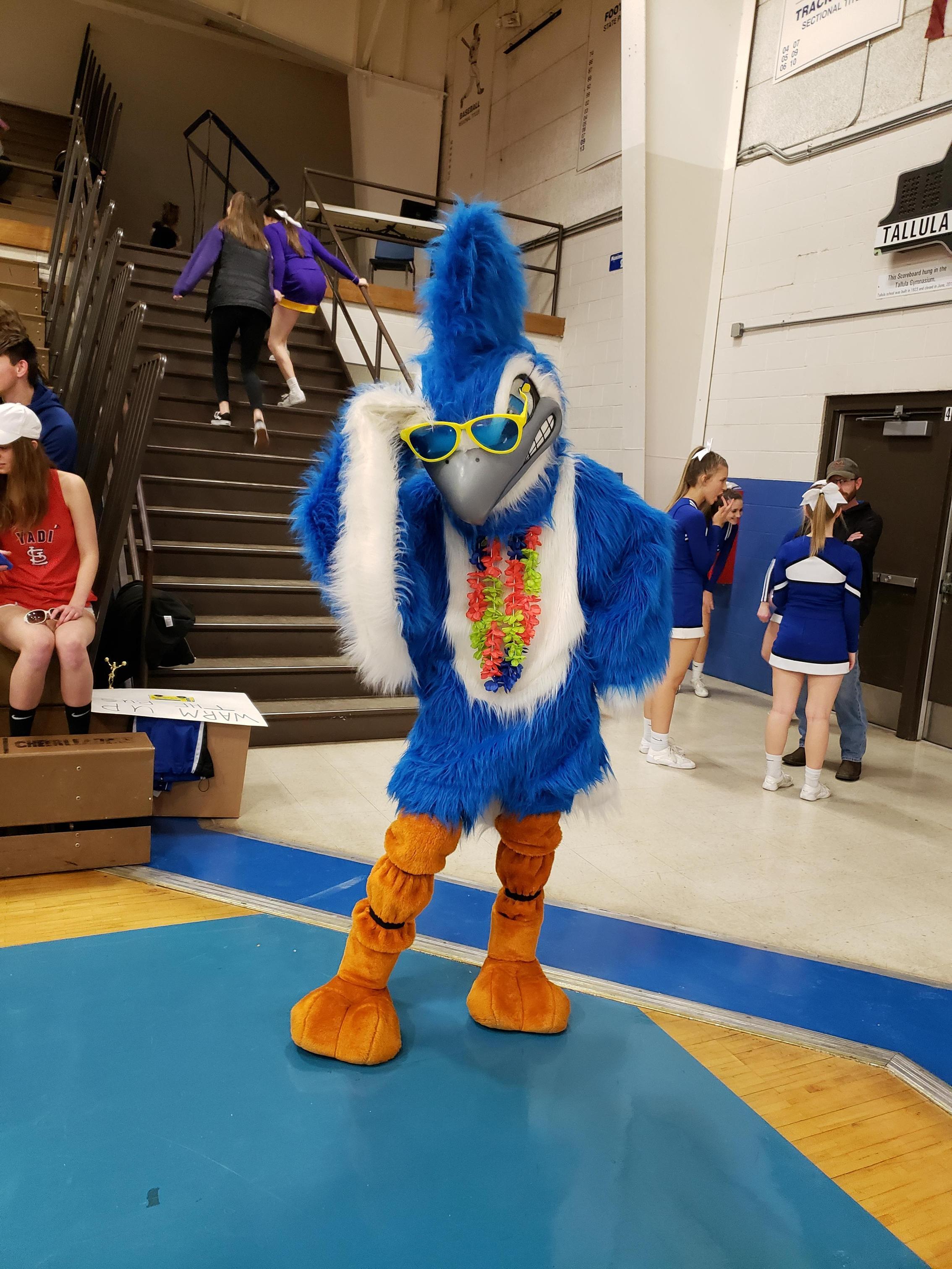 Bluejay mascot pic