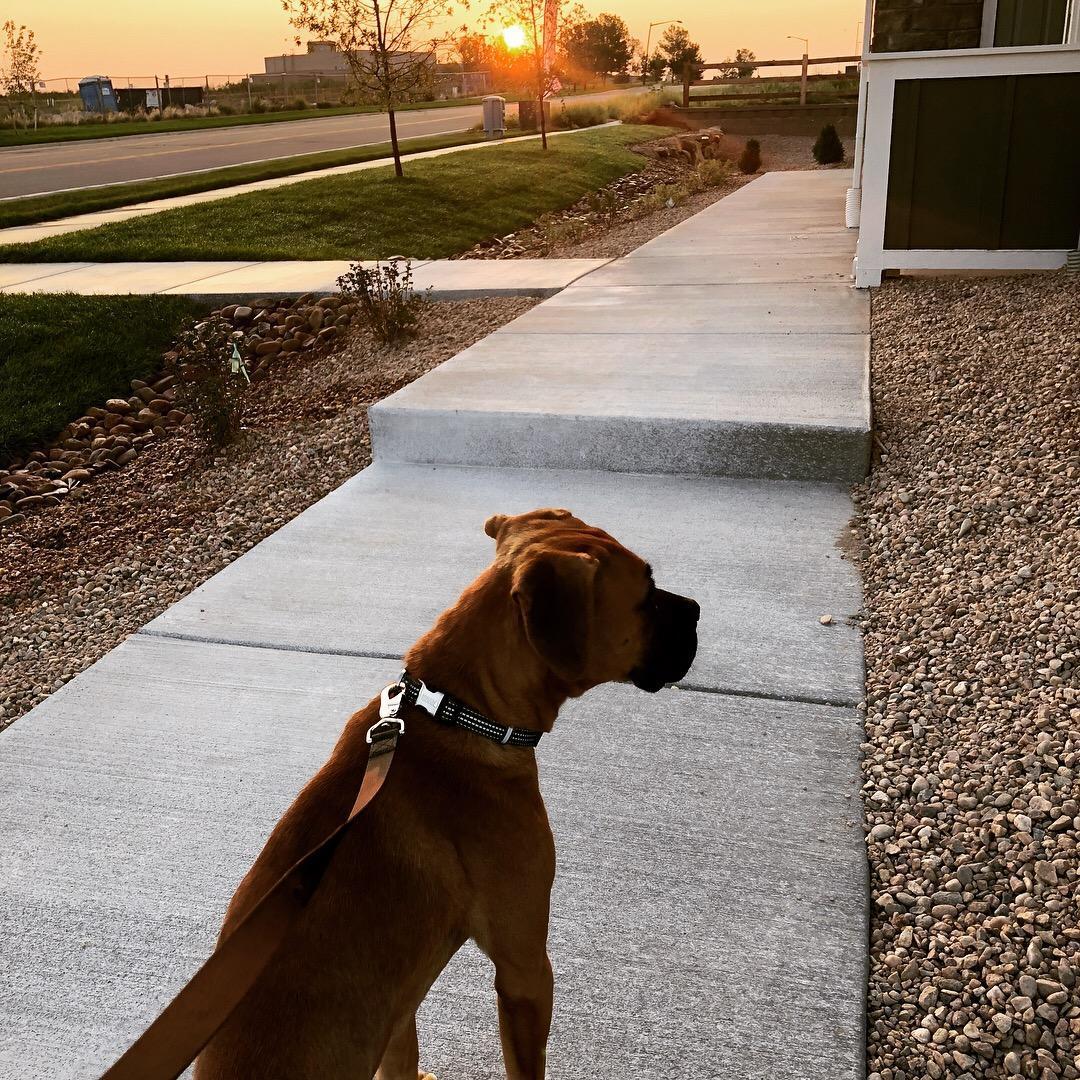 Henry at Sunrise