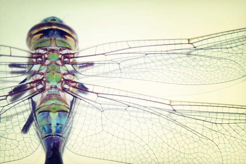 YHS Spring Musical - On Dragonfly Wings Thumbnail Image