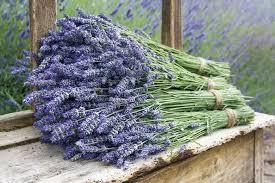 photo of bunches of lavender pulled together with rubber band