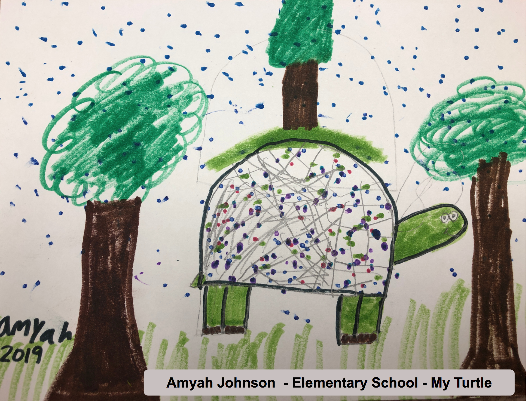 Amyah Johnson - Elementary School - My Turtle