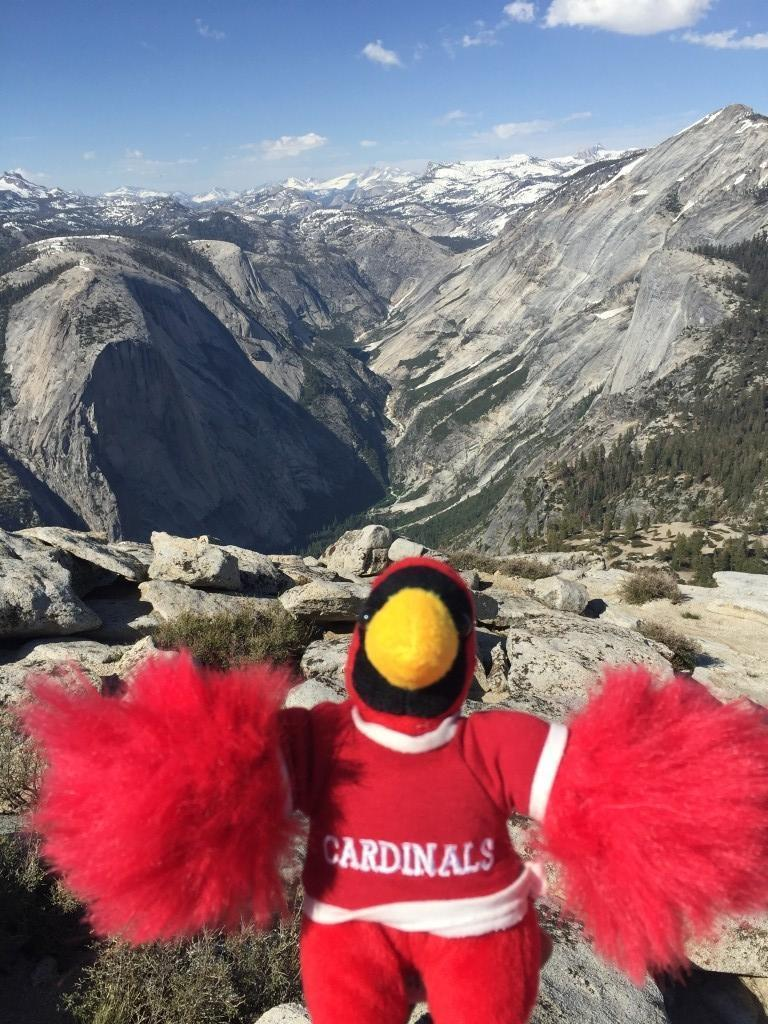 Cardinal plush on Half Dome Mountain!