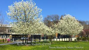 Naum Shulman, Music Director - Image of Spring trees near Astor Gate