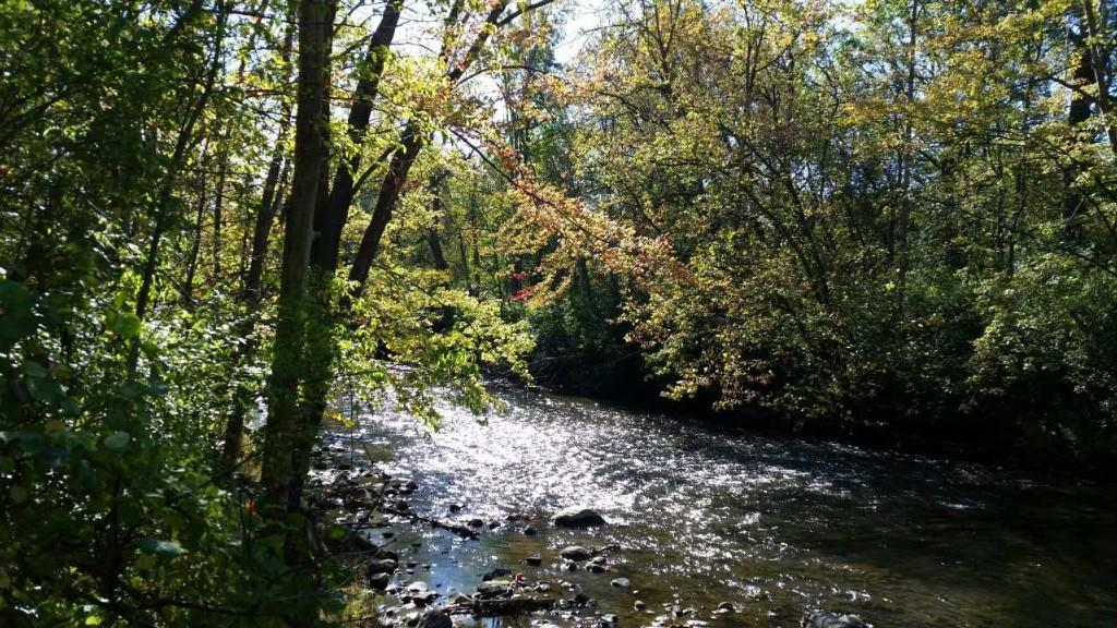 Picture of trees and stream off of a walking trail at Yates.