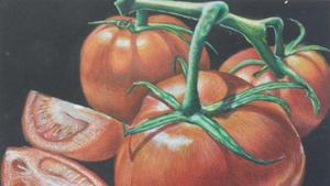 drawing of tomatoes