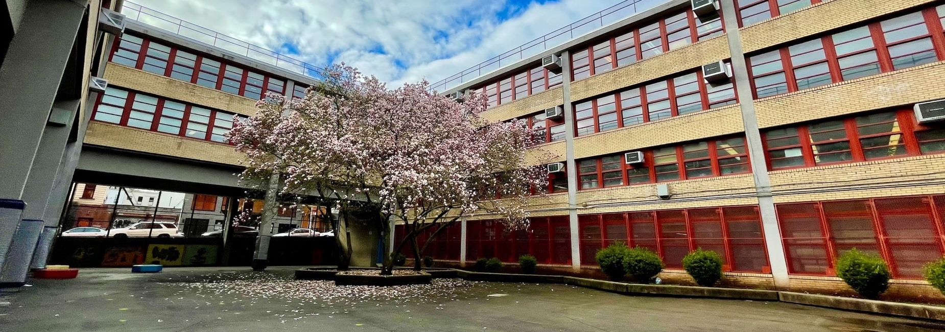 Spring is here at PS/IS 45's school yard!