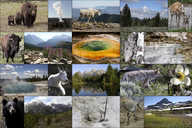 collage of national parks photos