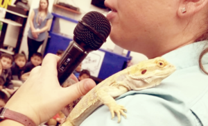 Bearded Dragon Lizard being held by trainer