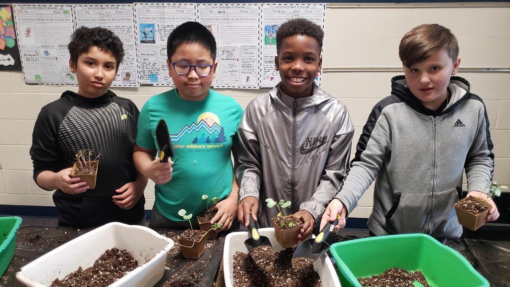 Student's transplanting plants