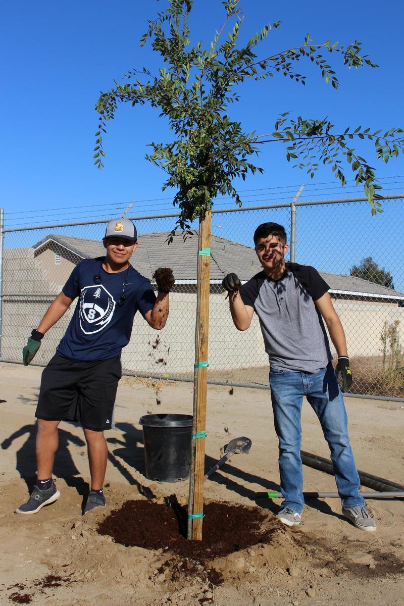 The Senior PLTW Environmental Sustainability Plants Trees Thumbnail Image