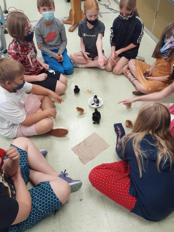 students sitting in a circle with chicks in the center