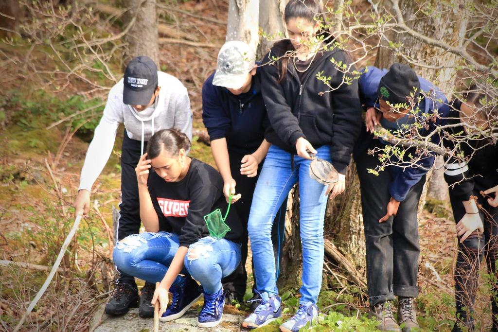 A group of students searching for animals in a pond