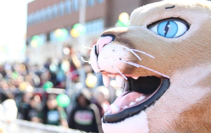 cougar mascot