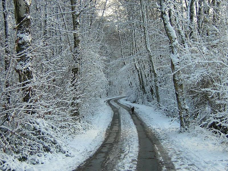 Snowy Roads Featured Photo