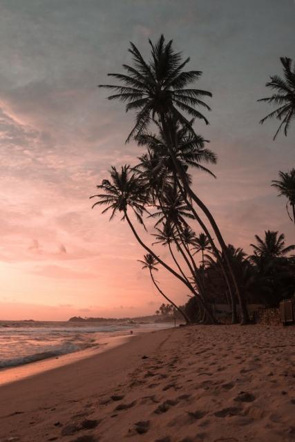 Palm trees along the beach