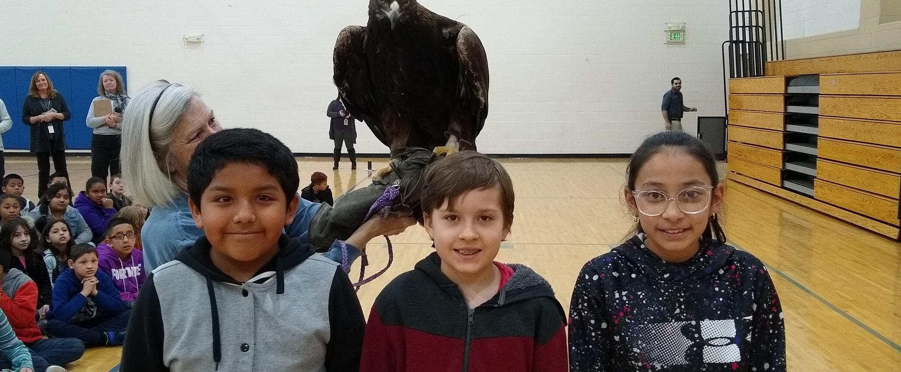 Hawk Quest