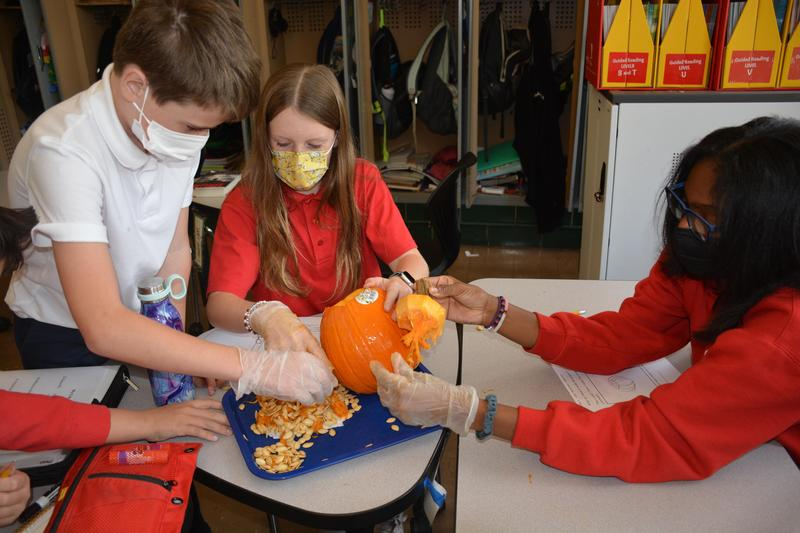 Pumpkin Dissection in 5th Grade Featured Photo