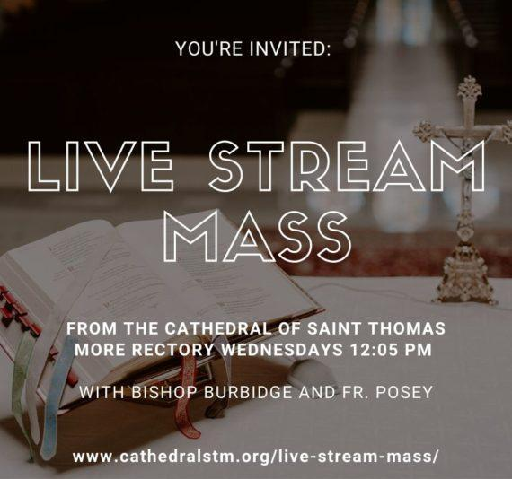 Live Stream the Cathedral of St. Thomas More Mass Daily at Home Featured Photo