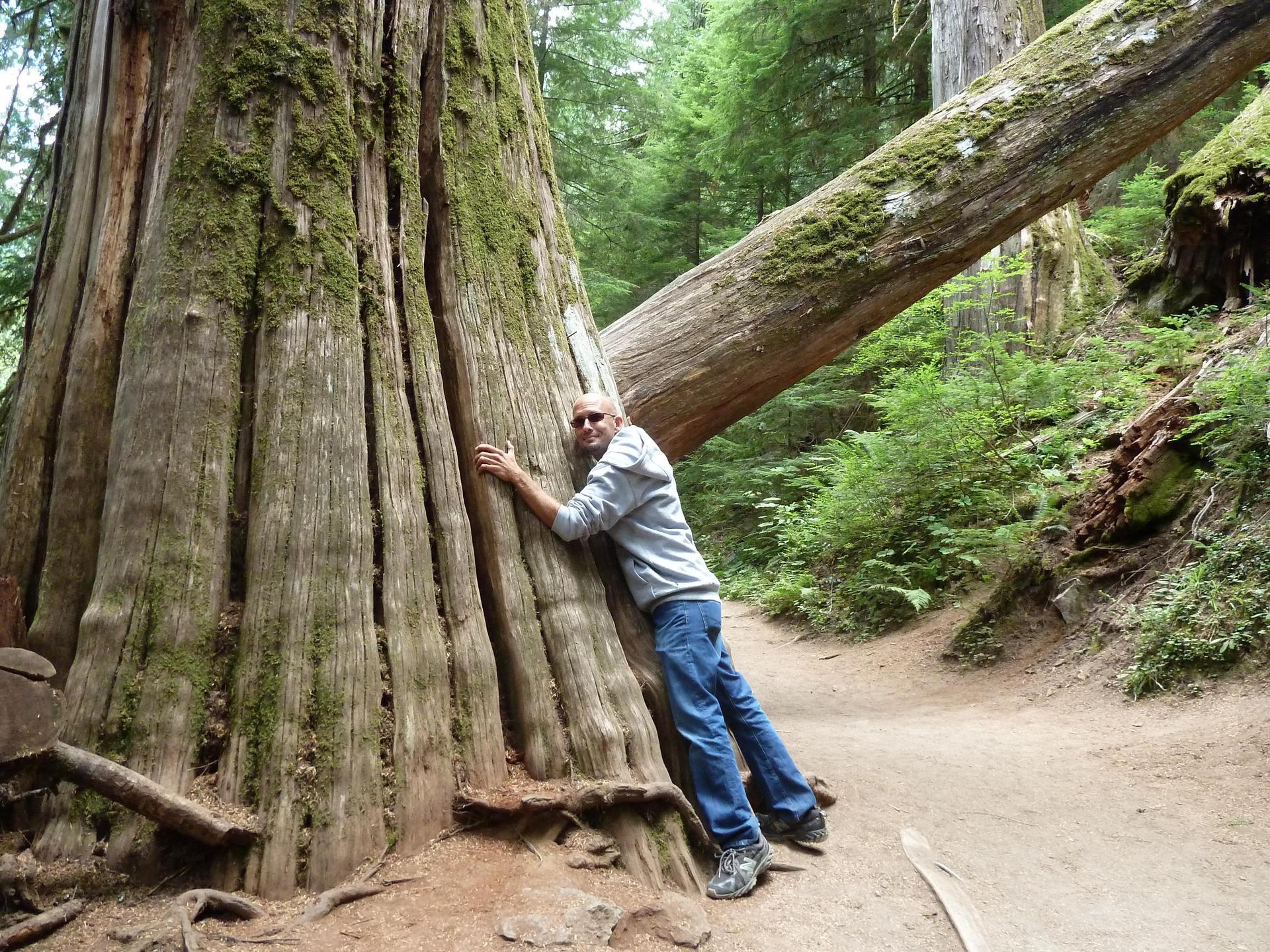 Man hugging tree