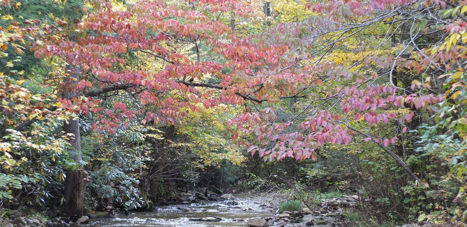 Red tree over creek