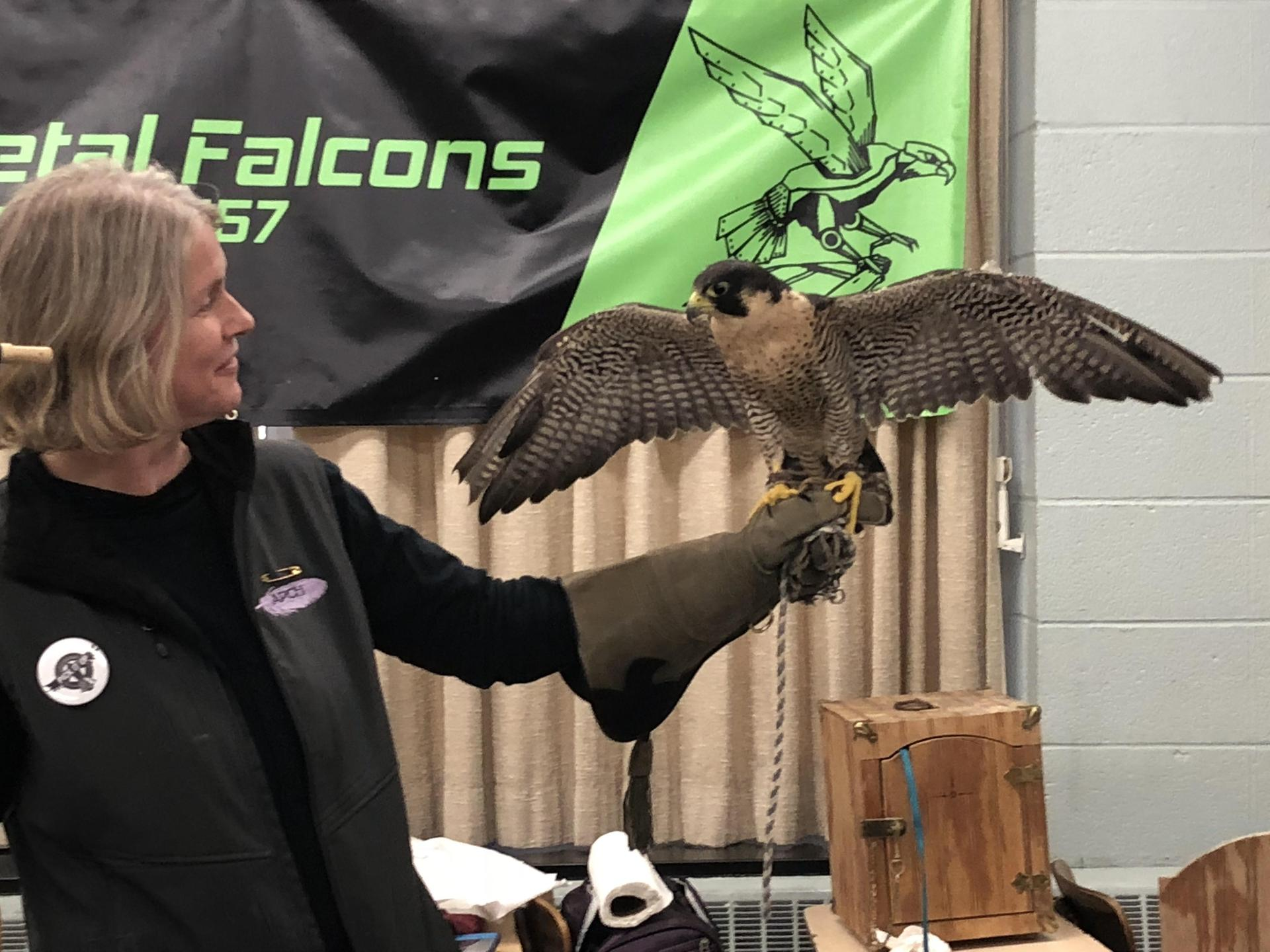 A live Falcon visits Xavier