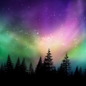 aurora borealis with tree silhouette