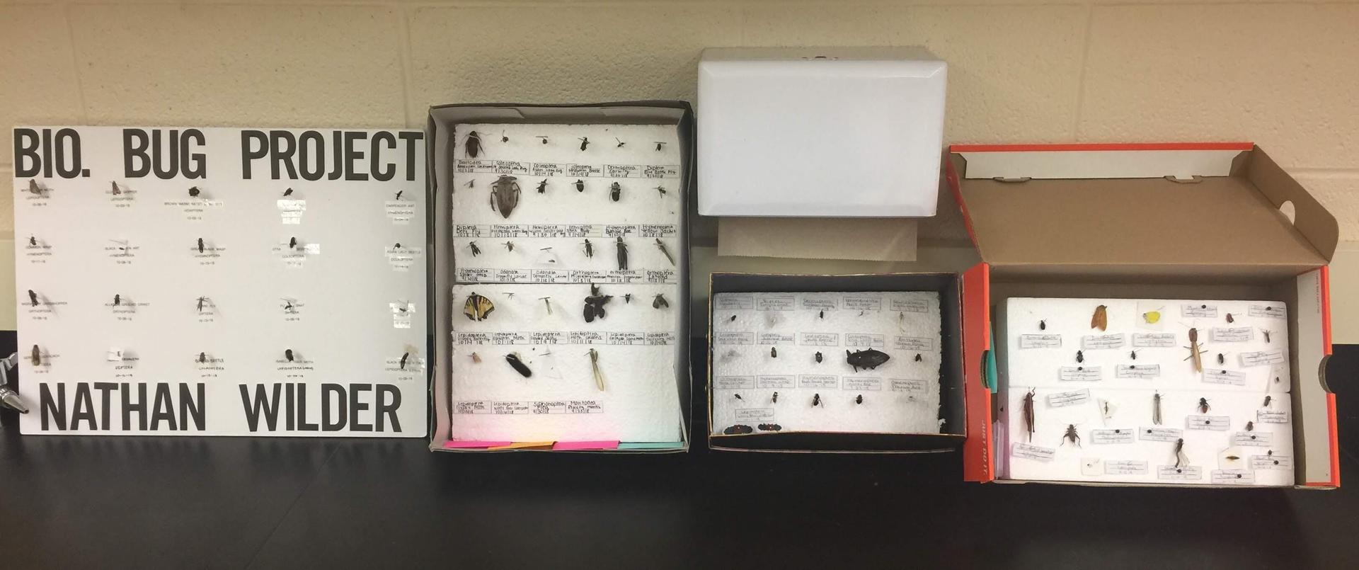 Some of the top insect collections this year!