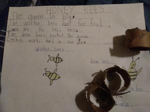 Honey bee write up