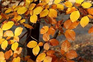 yellow-leaves-3805345_640.jpg