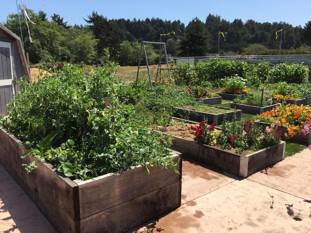garden ready for graduation