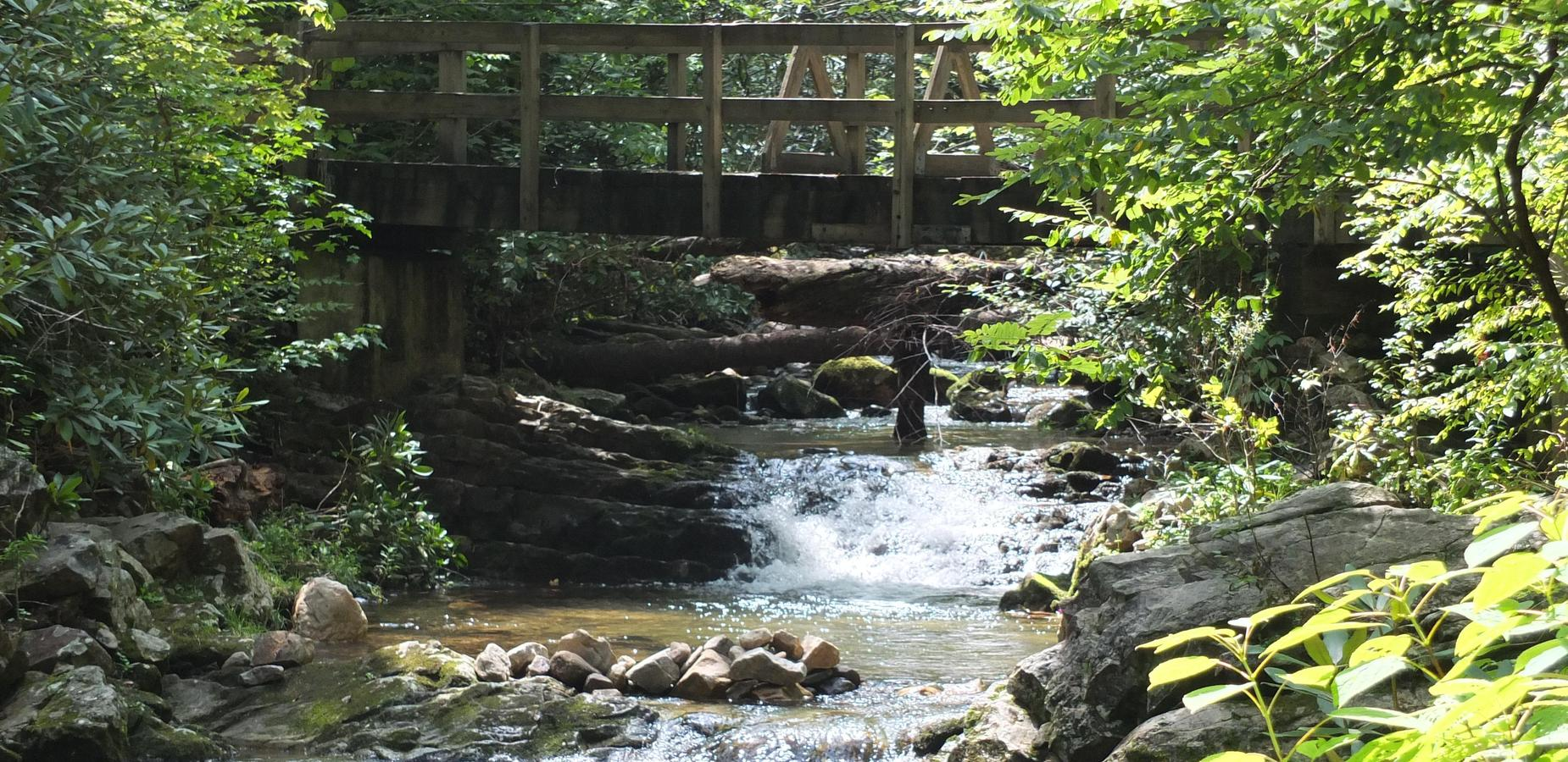 Creek in Greene County