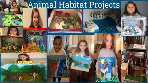 Animal habitat projects collage