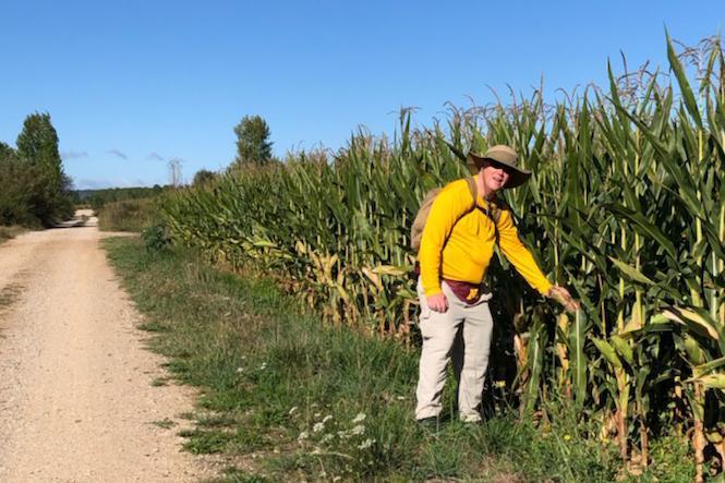 frtw cornfield
