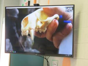 The aquarium educator shows students a skeleton to highlight the teeth and jaws of the otters.