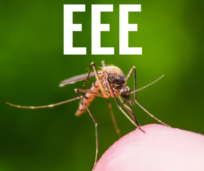 mosquito on knee with text EEE